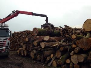 logs from devon
