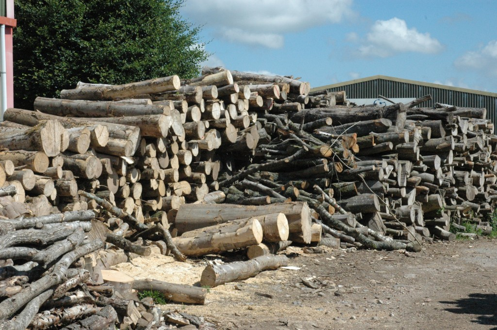 Dry logs Somerset