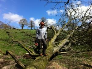 oak local logs